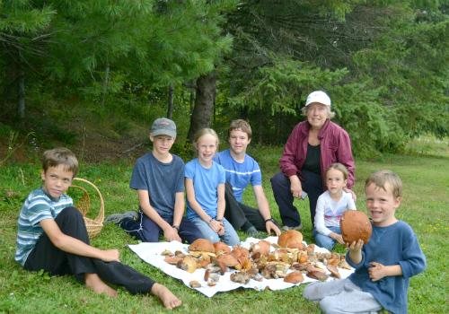 Mushroom pickers
