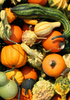 Zucchini, squash and pumpkins