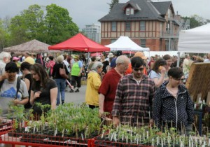 Rare and unusual plant sale